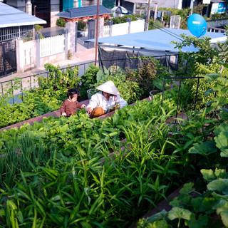 'Vườn rau bậc thang' xanh mướt trên mái nhà ở Quảng Ngãi
