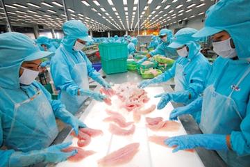 Điểm danh các công ty thủy sản xuất khẩu vào EU