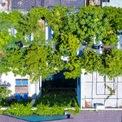 <p> Từ trên cao nhìn xuống, mái nhà xum xuê với những cây ăn trái lớn, tỏa tán rộng và xanh mắt.</p>