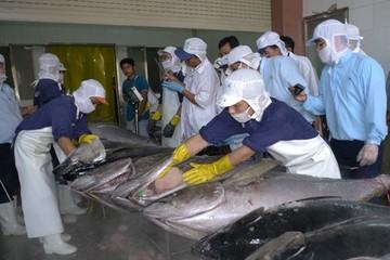 Xuất khẩu cá ngừ gặp khó về nguyên liệu do dịch Covid-19