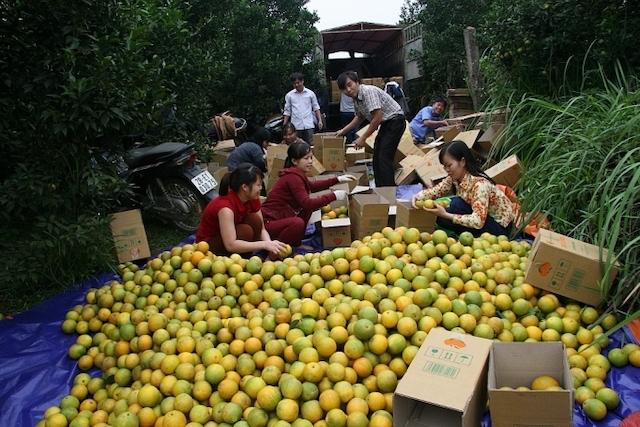 Nhiều loại trái cây thông thường như cam, quýt cũng có cơ hội xuất khẩu sang EU