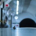 """<p class=""""Normal""""> Ngày 12/2, bức ảnh hai chú chuột tí hon đánh nhau dưới ga tàu điện ngầm để giành giật thức ăn của nhiếp ảnh gia Sam Rowley đoạt giải thưởng nhiếp ảnh của năm do bảo tàng lịch sử tự nhiên London tổ chức. Ảnh: <em>Sam Rowley.</em></p>"""