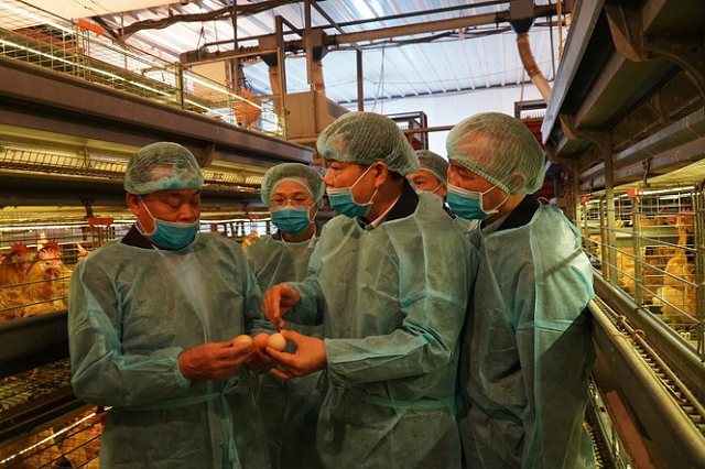Doanh nghiệp chăn nuôi đồng loạt giảm giá thịt lợn hơi còn 75.000 đồng/kg
