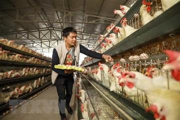 Trung Quốc cho phép nhập khẩu trở lại mặt hàng gia cầm từ Mỹ