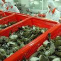 Xuất khẩu tôm sang EU kỳ vọng tăng trưởng 15% nhờ EVFTA