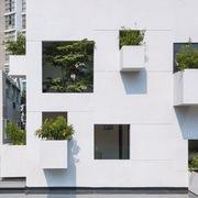 Ngôi nhà có vài chục ô cửa sổ 'mọc' cây ở TP HCM
