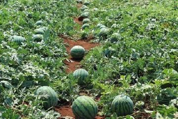 Các địa phương rà soát sản lượng và chất lượng từng loại nông sản
