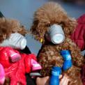 <p> Người dân đeo khẩu trang cho chó cưng tại một khu mua sắm ở Thượng Hải, Trung Quốc vào ngày 16/2 để tránh nhiễm virus Covid-19. Dịch Covid-19 đã lây lan ra 30 quốc gia và vùng lãnh thổ trên khắp thế giới, khiến số người chết vì dịch bệnh này tăng lên 2.462.<br /><br /> Tuần qua, Iran ghi nhận 18 ca nhiễm mới và số người thiệt mạng là 4. Ngoài ra, Italia ghi nhận ca tử vong đầu tiên, Israel và Lebanon cũng phát hiện ca nhiễm đầu tiên.Ảnh: <em>Reuters</em>.</p>