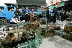 Trung Quốc nỗ lực cắt 'cơn thèm' động vật hoang dã