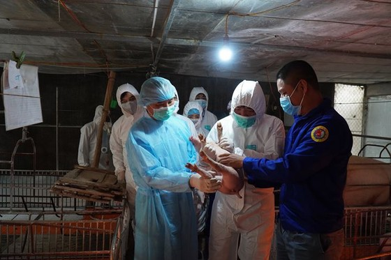 Đoàn công tác của Bộ trưởng Bộ NN-PTNT tới thăm 1 trang trại heo ở TX Phú Thọ - tỉnh Phú Thọ ngày 10-3. Ảnh: Bộ NN-PTNT