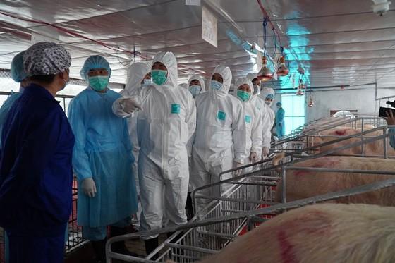 Bộ trưởng Nguyễn Xuân Cường tin tưởng tốc độ tái đàn heo đang tăng nhanh sẽ buộc các tập đoàn phải giảm giá thịt heo. Ảnh: Bộ NN-PTNT
