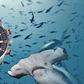 """<p class=""""Normal""""> <strong>11. Ulysse Nardin</strong></p> <p class=""""Normal""""> <span>Gây dựng tên tuổi với những đồng hồ bấm giờ lặn biển (marine chronometer watch), Ulysse Nardin là một trong những công ty đồng hồ nổi tiếng nhất thế giới, và có cho mình bộ sưu tập huy chương và chứng chỉ danh giá.</span></p> <p class=""""Normal""""> Năm được sở hữu bởi Kering: 2014</p> <p class=""""Normal""""> Phân khúc: Đồng hồ xa xỉ</p> <p class=""""Normal""""> Được thành lập vào năm 1846 và lấy tên của người sáng lập, lúc đó 23 tuổi, Ulysse Nardin đã giành được nhiều giải thưởng và đến năm 1975, Neuchâtel Observatory cho biết công ty đã đạt được 4.324 giấy chứng nhận hiệu suất, bao gồm 10 huy chương vàng. Năm 2016 vừa qua, thương hiệu kỷ niệm 170 năm thành lập.</p>"""