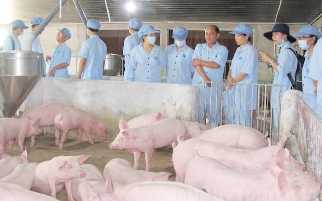 Giá lợn hơi sẽ về mức 70.000 đồng/kg