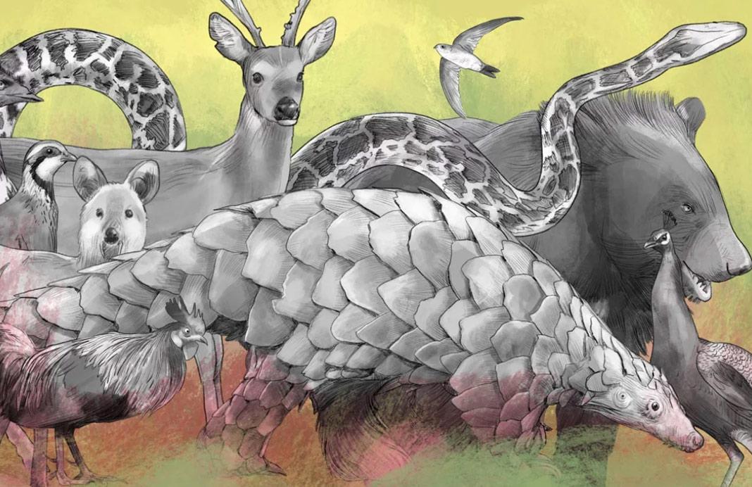 Người Trung Quốc buôn bán động vật hoang dã như thế nào?
