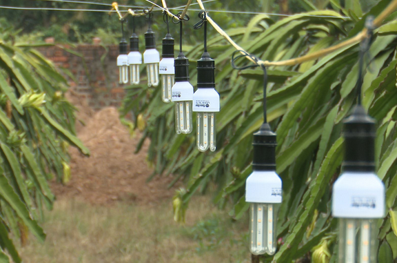 Bóng đèn Phích nước Rạng Đông chốt quyền tạm ứng cổ tức tiền mặt tỷ lệ 25%