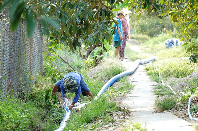 Đưa nước về cứu vườn sầu riêng tại xã Tam Bình (huyện Cai Lậy, tỉnh Tiền Giang).
