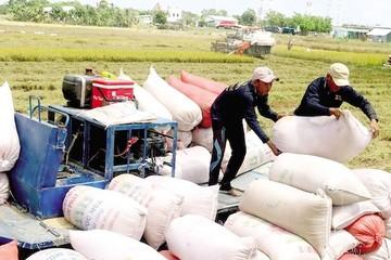 Doanh nghiệp phải chờ đến sau 28/3 để biết có thể xuất khẩu gạo trở lại hay không