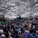 <p> Bất chấp lệnh cấm tụ tập dã ngoại tại một số khu vực, rất nhiều du khách vẫn đeo khẩu trang và đi tới công viên Ueno tại Tokyo, Nhật Bản vào ngày 22/3 để ngắn hoa anh đào nở. Ảnh: <em>Reuters</em>.</p>