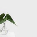 """<p> <strong>6. Trồng cây và trang trí không gian nhà</strong></p> <p> Hãy trở thành """"lãnh chúa"""" trong ngôi nhà bạn với khu vườn xanh tốt để sáng dạo bộ, cuối tuần uống trà ngắm cây. Ở nhà và sống tao nhã bằng việc trồng cây, sắp xếp lại không gian nhà cửa đẹp và gọn gàng, sạch sẽ.</p> <p> Trồng cây sẽ giúp không gian ngôi nhà trong lành, xanh hơn và gần gũi với thiên nhiên nhất là khi bạn ở thành thị. Ở nhà nhiều, bạn quan sát ngôi nhà kỹ hơn và phát hiện ra một số thứ cần thay đổi, đây đúng là thời điểm để bạn chăm chút hơn cho không gian sống. Lược bỏ những đồ không cần thiết, sắp xếp lại các không gian, trang trí phòng làm việc cá nhân... ngôi nhà sẽ trở nên sạch đẽ và giúp bạn thấy thoải mái hơn.</p>"""