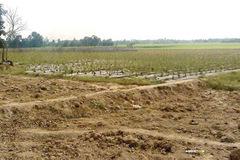 Hơn 65 ha đất trồng lúa ở Phú Yên được chuyển đổi mục đích sử dụng