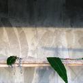 <p> Ngoài ra, một phương pháp intaglio ép bằng tay được sử dụng để chuyển vẻ đẹp xúc giác của lá chuối lên bề mặt bê tông. Đội ngũ thiết kế làm việc chặt chẽ với các thợ thủ công để đạt được hiệu quả mong muốn. Đây là một yếu tố quan trọng của thiết kế khi ngôi nhà được xây dựng trong một khuôn viên trang trại chuối nhỏ.</p>