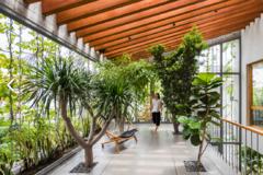 Ngôi nhà như khu rừng nhiệt đới ở TP HCM