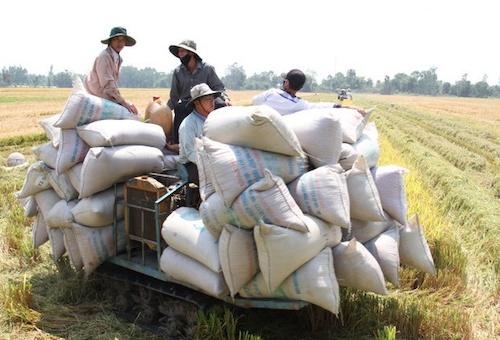 An Giang kiến nghị cho phép doanh nghiệp tiếp tục xuất khẩu gạo