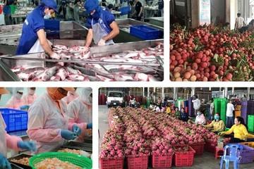 Xuất khẩu nông sản sụt giảm do hàng loạt đơn hàng bị hoãn, hủy