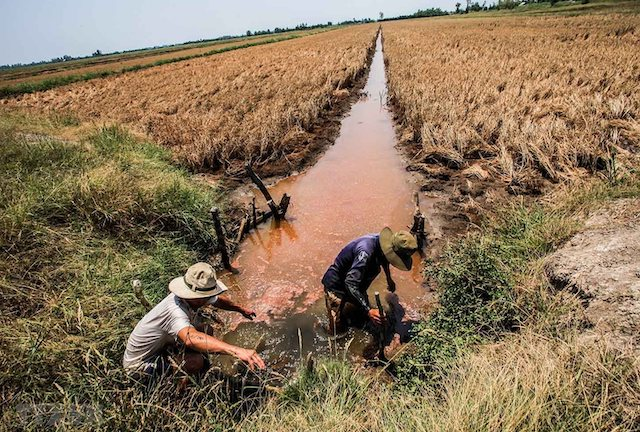 Hỗ trợ 530 tỷ đồng cho 8 tỉnh ĐBSCL phòng, chống hạn hán, xâm nhập mặn