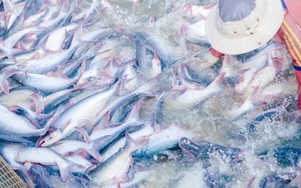 Xuất khẩu giảm, Thủy sản Mekong báo lãi quý I giảm 79%
