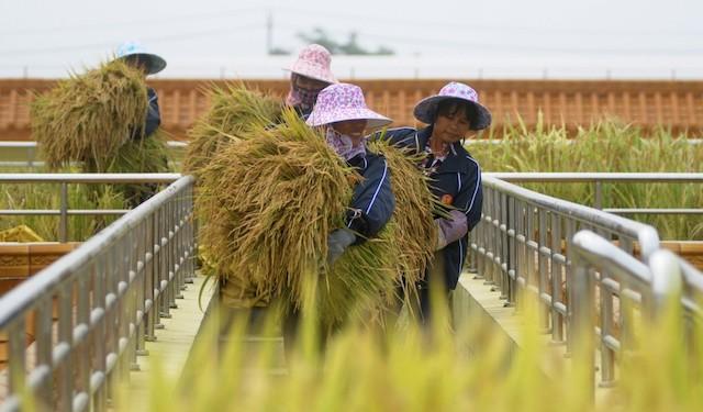 Hơn 4.100 tấn gạo trong hạn ngạch 400.000 tấn đã được xuất khẩu