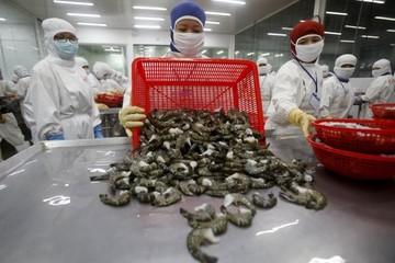Nhu cầu tôm thế giới đang trên đà tăng, nông dân Việt đối mặt với nguy cơ thiếu nguồn cung nguyên liệu