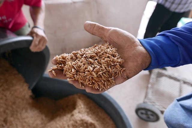 Thái Lan yêu cầu doanh nghiệp giảm giá gạo 50%