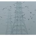"""<p class=""""Normal""""> <strong>Trước:</strong> Không khí New Delhi bị ô nhiễm đến mức có thể quan sát từ không gian, theo tờ <em>USA Today</em>. Trong hình:<span>Các trụ điện ở New Delhi, Ấn Độ, vào ngày 30/10/2019. Ảnh: <em>Adnan Abidi / Reuters</em></span></p>"""