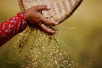 Giá gạo xuất khẩu của Việt Nam cao nhất 2 năm, gạo Thái tiếp tục tăng