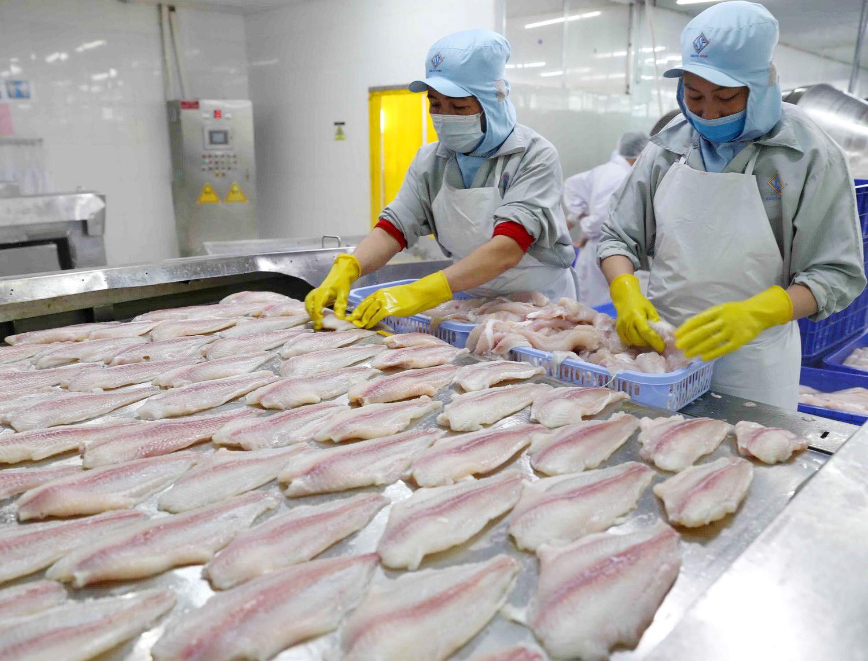 Xuất khẩu cá tra sang thị trường lớn giảm 2 con số trong quý I, có cơ hội phục hồi vào quý II