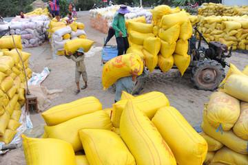 Hơn 38.000 tấn gạo được mở tờ khai vào 0h ngày 26/4
