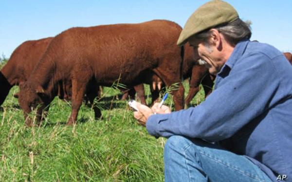 Nông dân Mỹ tiêu hủy hàng nghìn gia súc, hàng triệu gia cầm do Covid-19