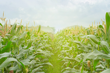 Doanh thu Tập đoàn PAN quý I đạt 1.283 tỷ đồng, phát triển thêm sản phẩm trái cây sấy