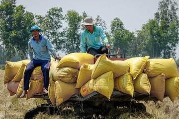 Xuất khẩu gạo sang Trung Quốc tiếp tục tăng mạnh