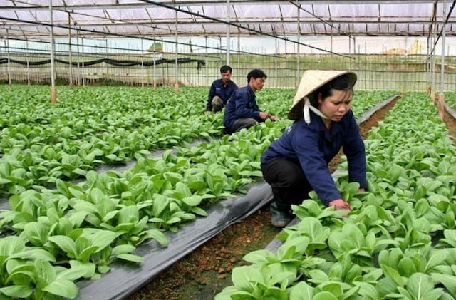 Hà Nội kêu gọi đầu tư vào 11 dự án nông nghiệp