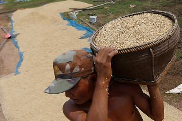 Giá gạo xuất khẩu của Việt Nam lập đỉnh mới, gạo Thái giảm