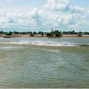 Doanh số xuất khẩu cá tra Navico 4 tháng giảm 20%