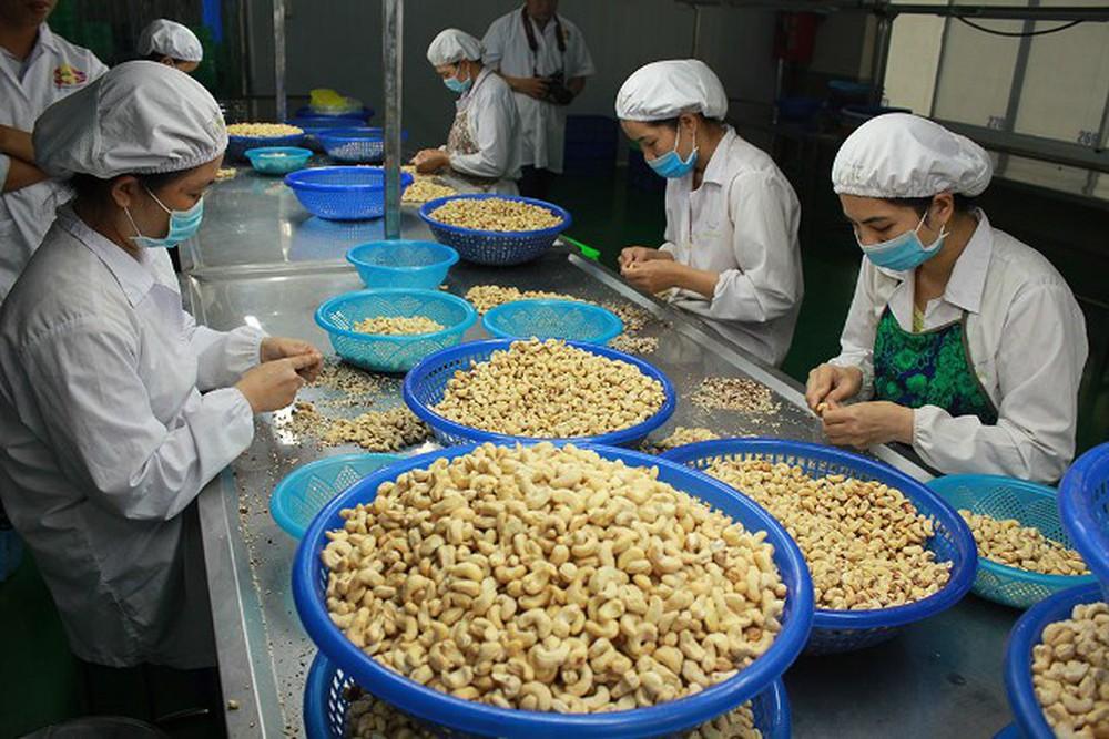 Giá xuất khẩu điều nhân của Việt Nam dự báo tăng nhẹ trong ngắn hạn