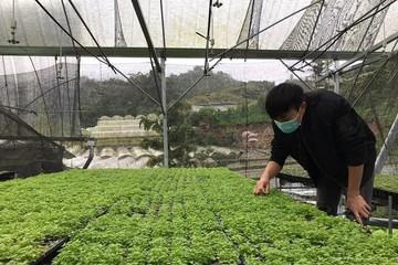Lazada bán rau thời Covid-19: 3,5 tấn rau củ được mua hết trong nửa giờ