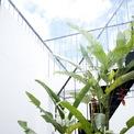 <p> KTS bố trí nhiều khoảng xanh để tăng hiệu ứng thẩm mỹ cũng như tạo cảm giác dịu mát cho ngôi nhà.</p>