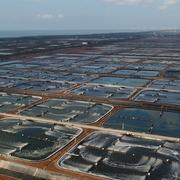 Thực phẩm Sao Ta sẽ mua 2 triệu cổ phiếu quỹ từ 28/5