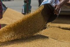 Tưởng thiếu hụt nguồn cung nhưng thế giới lại đang 'bơi giữa biển lúa mì'
