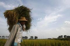 Giá gạo xuất khẩu của Việt Nam, Ấn Độ cao nhất một năm