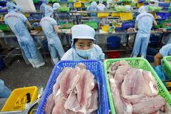 Xuất khẩu cá tra sang Singapore tăng trưởng 3 con số